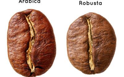 Caffè Arabica e Robusta, tutte le differenze